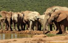 Afryka – tam gdzie żyją słonie i żyrafy