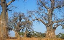 Afryka – śladami Stasia i Nel