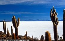 Wyspa kaktusów - Salar de Uyuni
