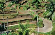 Tarasy ryżowe, Bali