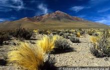 Bezdroża wysokogórskiego Altiplano