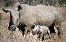 PN Serengeti