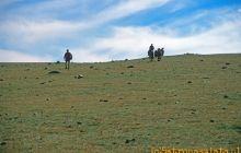 Przez mongolski step