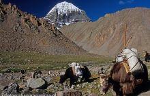Karawany jaków pod świętą górą Kailash