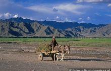 Mieszkaniec Tybetu w czasie codziennych zajęć