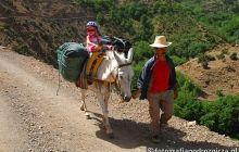 W górach ludziom pomagają zwięrzęta